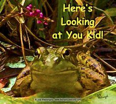 Humphrey Bogart Frog