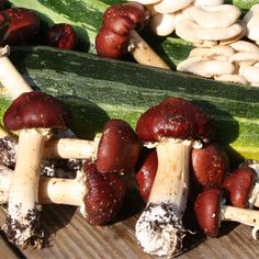 Discover a simple way to grow wine cap mushrooms in your garden this spring and summer.data-pin-do=