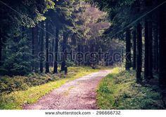 Gratis afbeelding op Pixabay - Thüringer Woud, Bos, Thüringen