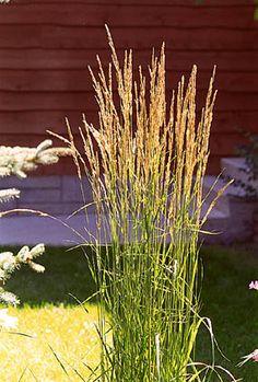 Decorative grass tall logan potterf yard inspiration for Tall grass decor