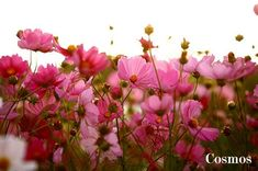 how to grow and what to grow for your own cut flower garden
