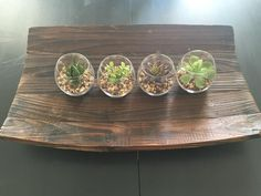 Modern Design Clear Round Artificial Succulent Plant Glass Display Vases: Home