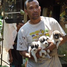 Volunteers are racing to rescue dogs left behind in the Bali volcano red zone before they are claimed by an eruption.