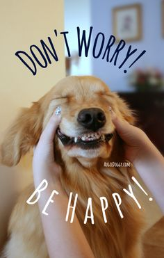 "Golden retriever Ti says, ""Don't worry! Be happy!"""