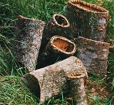 """Tulip tree bark baskets represent an old but extremely """"handy"""" craft from the hills of North Carolina. From MOTHER EARTH NEWS magazine."""