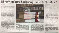 """Annie Zaleski on Twitter: """"I needed this pure story in my life today. Meet Quilliam the library hedgehog.… """""""
