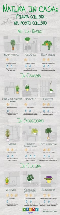 Find out which plant is best suited to your home environments.- Scopri quale pianta è più adatta ai tuoi ambienti di casa. Find out which plant is best suited to your home environments.