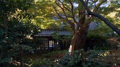 great natural looking shade garden