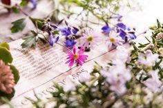 道のりを記憶に残して: 春から秋まで気づけばずっと咲いているキク科のお花、青みピンクと淡紫色の/花・ガーデニング