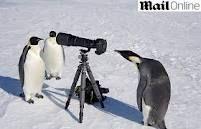 pinguim antartida