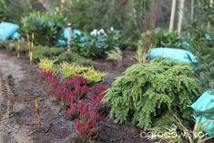 Ogród z lustrem - strona 50 - Forum ogrodnicze - Ogrodowisko Plants, Plant, Planets