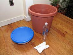 Convert a Standard Planter to Self Watering - Elaine Espinosa via bucolicbushwick.com