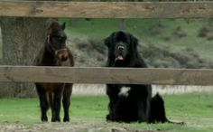 """OMG this is our favorite commercial!!! """"Benny the Newf"""" for Bank of America"""