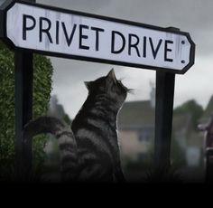 Privet Drive fan art.
