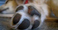 Comment bien couper les griffes de son chien ? Un vétérinaire vous répond !