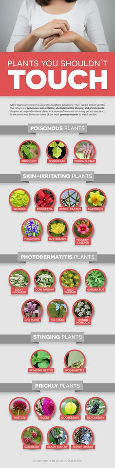 Plants You Shouldn't Touch #infographic - includes poisonous, skin-irritating, photodermititus, stinging, and prickly plants.