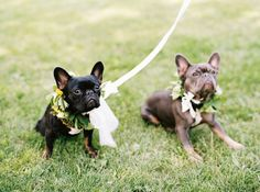 A Buffalo Bills football player and cheerleader share their beautiful rustic wedding featuring a palette of soft yellow palette, a foodie-inspired menu and appearances from the couple's French Bulldog. Bourbon, French Bulldog Puppies, Dog Wedding, Dog Wear, Love Pet, Beautiful Dogs, Mans Best Friend, Cheerleading, Boston Terrier