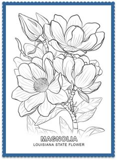 Louisiana State Flower Coloring Page - Print or Color Online - Magnolia
