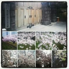 浜離宮恩賜庭園 (Hamarikyu Garden)は中央区、東京都にあります