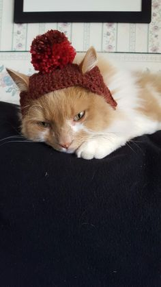 Crocheted  Hat for my Cat