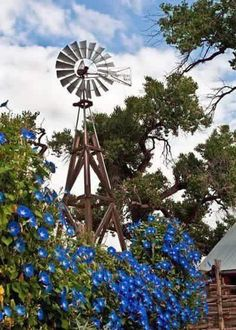 Blue morning glories growing on an old farm windmill. This reminds me of my windmill in Guthrie Oklahoma when I lived there Back in Michigan now! Country Farm, Country Life, Country Living, Country Roads, Country Bumpkin, Country Casual, Country Strong, Country Quotes, Country Style