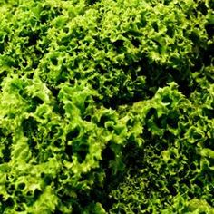 Kale, collard greens and mustard greens can be boiled or steamed.