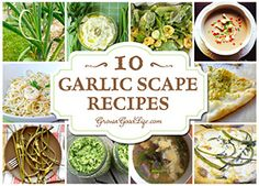 Garlic scapes, also sometimes called garlic stems, stalks, shoots or spears, are the flower stalks that hardneck garlic plants produce before the bulbs mature. Check out this post for some wonderful recipes that allow the delicate garlicky flavor shine.