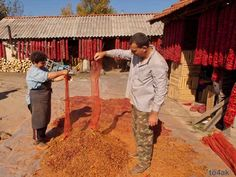 people making red pepper spice in Bistrica, Macedonia