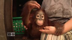 Beautiful, tropical Borneo is one of the few places on Earth where orangutans still exist in the wild. Meet the Canadian woman who has devoted her life to saving these gentle creatures from the brink of extinction.