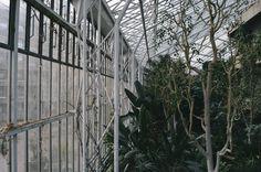 Alphabet • Blog // Barbican Conservatory
