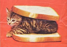 Sandwich... My Friend used to call his cat sandwich, haha. Hope he didn't meant it as literally as this