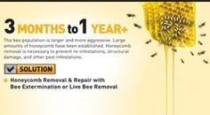 Honeybee Activity After 3 Months to 1 Year On Your Property.