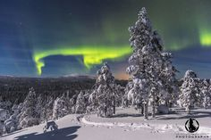 Aurora Borealis over Pyhä Luosto National Park in northern Finland Landscape Pictures, Nice Landscape, America And Canada, Arctic Circle, Parks N Rec, Space And Astronomy, Natural Scenery, Cool Landscapes, Aurora Borealis