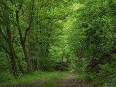 Heinrich Wilhelm: Wanderung im Laubwald - Leinwandbild auf Keilrahmen