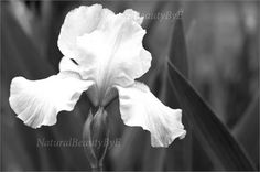 Iris, flower, flower photography, black and white, nature photography, soothing, delicate, nature print, wall art, print For sale is the photograph taken by myself, printed on archival quality art paper, suitable for framing. Price includes the print only, not matted or framed. There is no watermark on the printed product. I offer standard sizes that can be printed at a great level of quality and in the most visually pleasing proportions. Your print will be made on Ilford Pearl archival art…