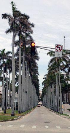 Palm Beach. Royal Palm Way #PalmBeach #ThingsToDoInPalmBeach #PalmBeachAttractions