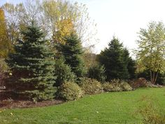 Wonderful Court Yard Landscaping Ideas For Front Yard 30 + wunderbare Hof Landschaftsbau Ideen f Burm Landscaping, Landscaping On A Hill, Large Backyard Landscaping, Privacy Landscaping, Backyard Garden Design, Landscaping Ideas, Mailbox Landscaping, Privacy Hedge, Landscaping Software