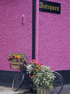 size: Photographic Print: Bicycle and Flowers Outside Antique Store in Carrick by Richard Cummins : Cummins, Mauve, Shades Of Purple, Purple Haze, Custom Wall, Antique Stores, Cool Posters, Botanical Art, Custom Framing