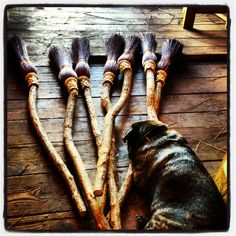 Brutus the pug; Guardian of Witch's Brooms
