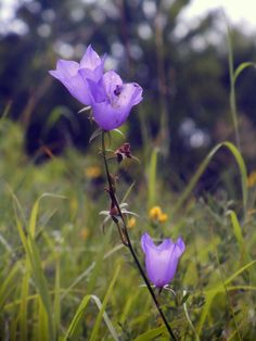 Wild flowers, Falcade, Dolomiti, July 2012, © Avan Yan Photography