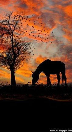 In past we showcased 50 adorable horse pictures and 25 beautiful horses pictures and today we are showcasing 20 wonderful horse photography examples for All The Pretty Horses, Beautiful Horses, Animals Beautiful, Beautiful Sunset, Stunningly Beautiful, Silhouettes, Cavalo Wallpaper, Jolie Photo, Horse Pictures