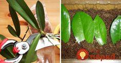 Tešte sa z nich donekonečna: Najjednoduchší spôsob, ako rozmnožiť obľúbené izbové rastliny! Ikebana, Aloe Vera, Indoor Plants, House Plants, Orchids, Home And Garden, Christmas Ornaments, Holiday Decor, Home Decor