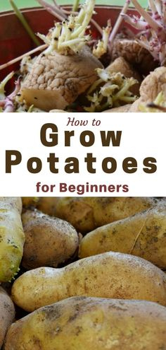 How to Grow Potatoes. Growing potatoes is simple with these tips and tutorial. Whether in the ground, raised bed or a container, growing potatoes is simple to do. Learn how you can grow your own potatoes in your backyard garden.