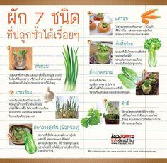 ผัก Fruit Garden, Garden Trees, Edible Garden, Vegetable Garden, Healthy Mind And Body, Planting Bulbs, Eco Friendly House, Farm Gardens, Urban Farming
