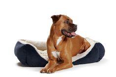 Deutscher Boxer in Hundesofa ASPEN