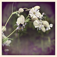 blomsten og bien3_L