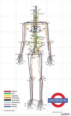 The human body visualized as a subway map by designer Sam Loman, a fine addition to these visual metaphors using the London Tube map.