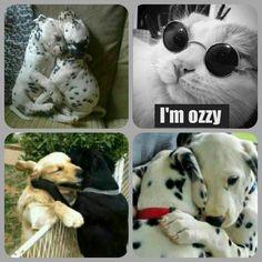 I'm Ozzy