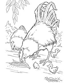 Farm Animal Coloring Page, Free Printable Corn Fed Chickens Coloring Pages  Featuring Hundreds Of Farm Animals Coloring Page Sheets.