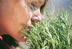 Επιστήμονες Ανακάλυψαν το βότανο που παλεύει την Άνοια και αυξάνει τη μνήμη κατά 75% | Alexiptoto